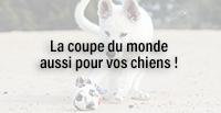 La coupe du monde aussi pour vos chiens !