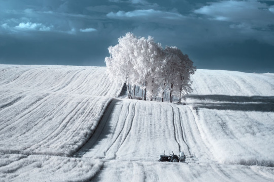 The Majestic Beauty Of Trees Photography