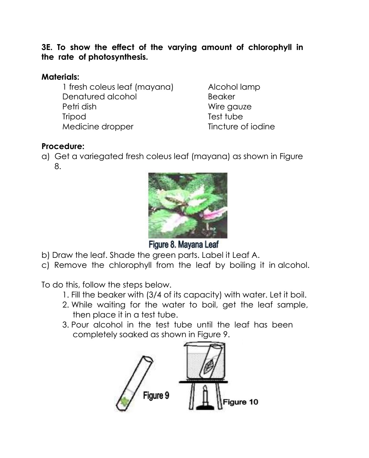 Science Concepts And Questions K To 12 Photosynthesis