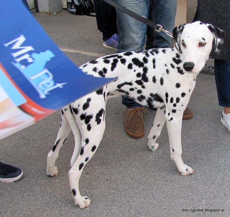 Ljubljana, Dan pasjih mladičkov