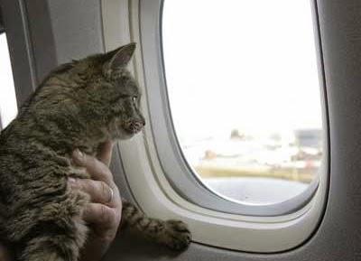 Viajando de Avião com Gatos
