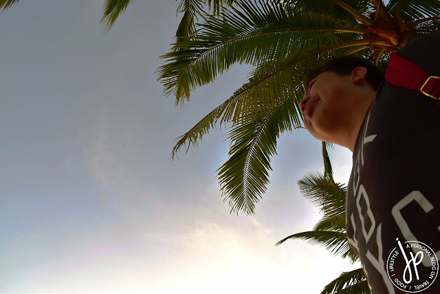 coconut trees, man standing up