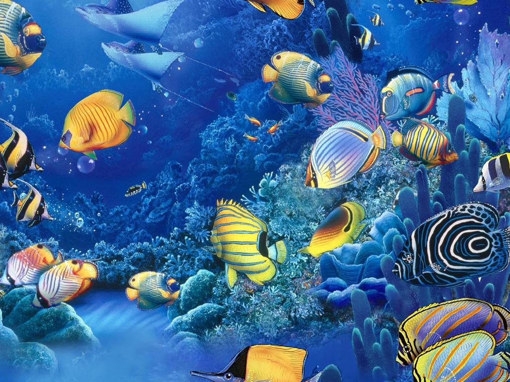 Aquarium Design Ideas Sea Fish Wallpaper Osabelhudosec