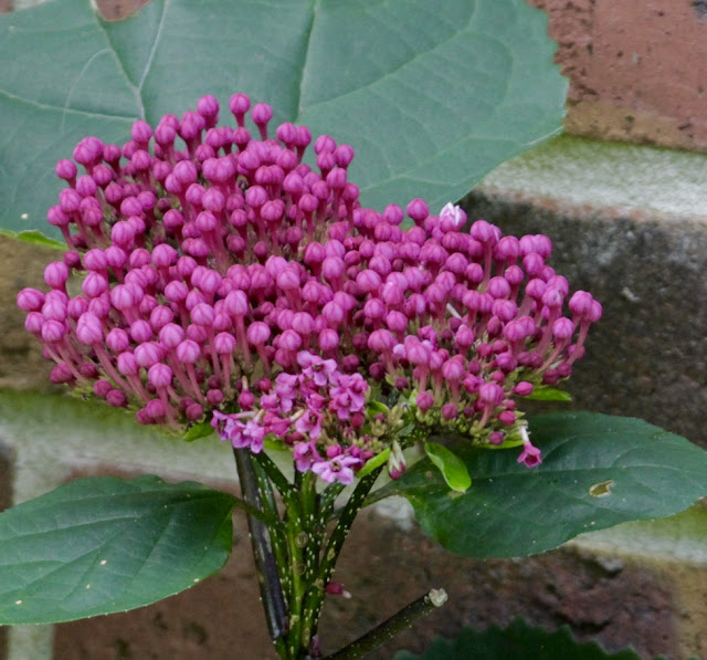 The Nature of Things: A pre-Bloom Day look at the garden