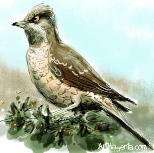 Barred Warbler sketch painting. Bird art drawing by illustrator Artmagenta