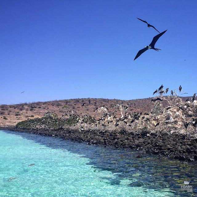 aves playa espiritu santo