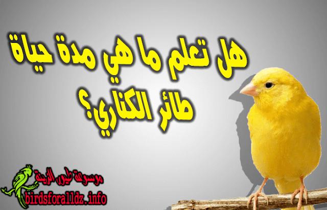 مدة حياة طائر الكناري