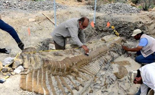 Ahli Paleontologi Dengan Fosil