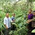 Kelompok Tani Desa Wae Bangka, Siap Budidayakan Tanaman Porang