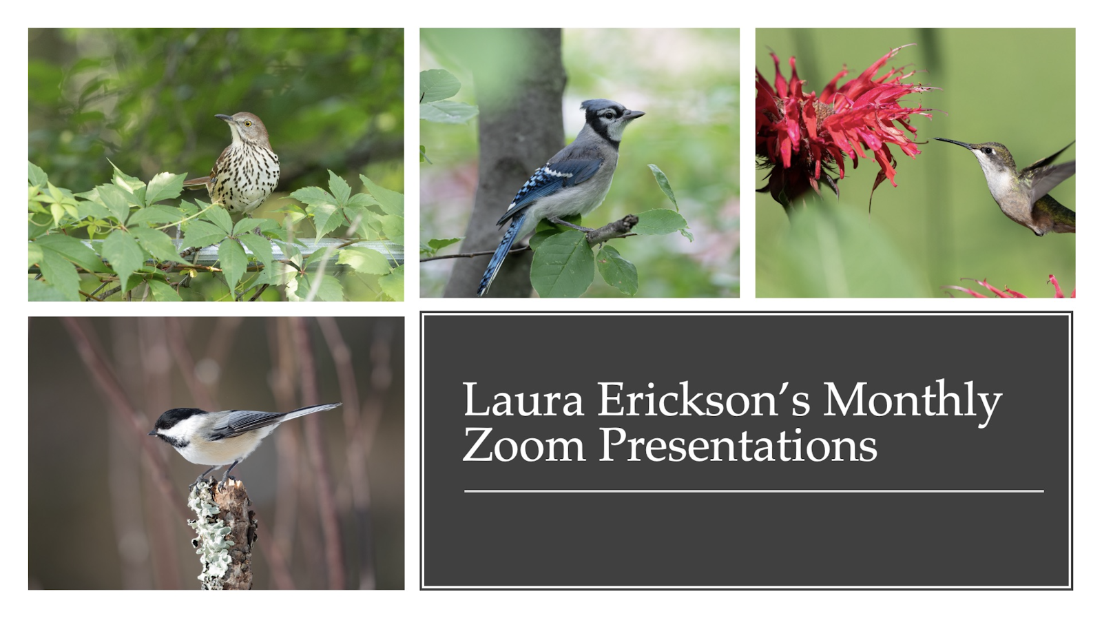 Laura's past Zoom presentations