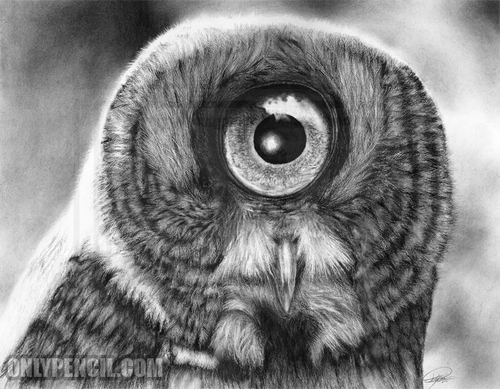 10-Evolution-Great-Gray-Owl-Lisandro-Peña-Animal-Drawings-with-Attention-to-Minute-Details-www-designstack-co