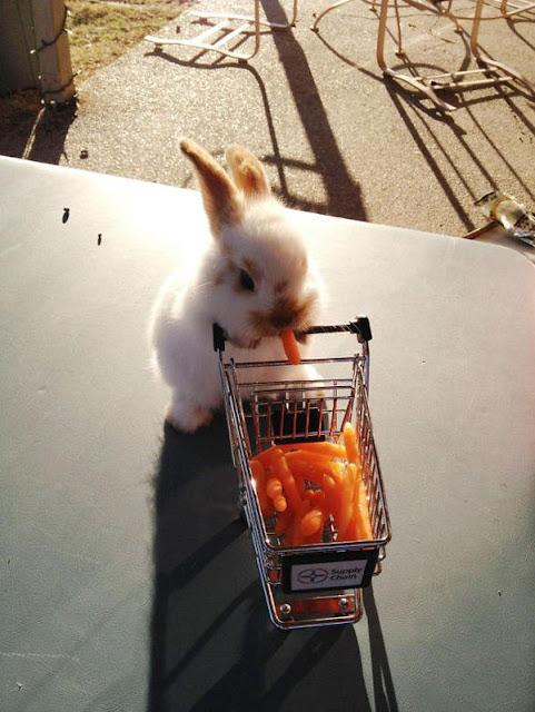 Biệt đội 20 thỏ con có thể hạ gục bạn bằng vẻ ngoài dễ thương