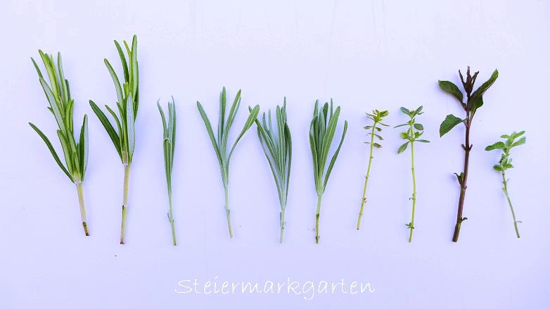 Stecklinge Krauter Vermehren Leicht Gemacht Steiermarkgarten