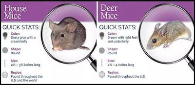 Cara Mengusir Tikus Paling Ampuh Dan Alami Sudah Terbukti
