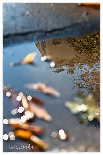 Tócsában tükröződő panelház és falevelek ősszel