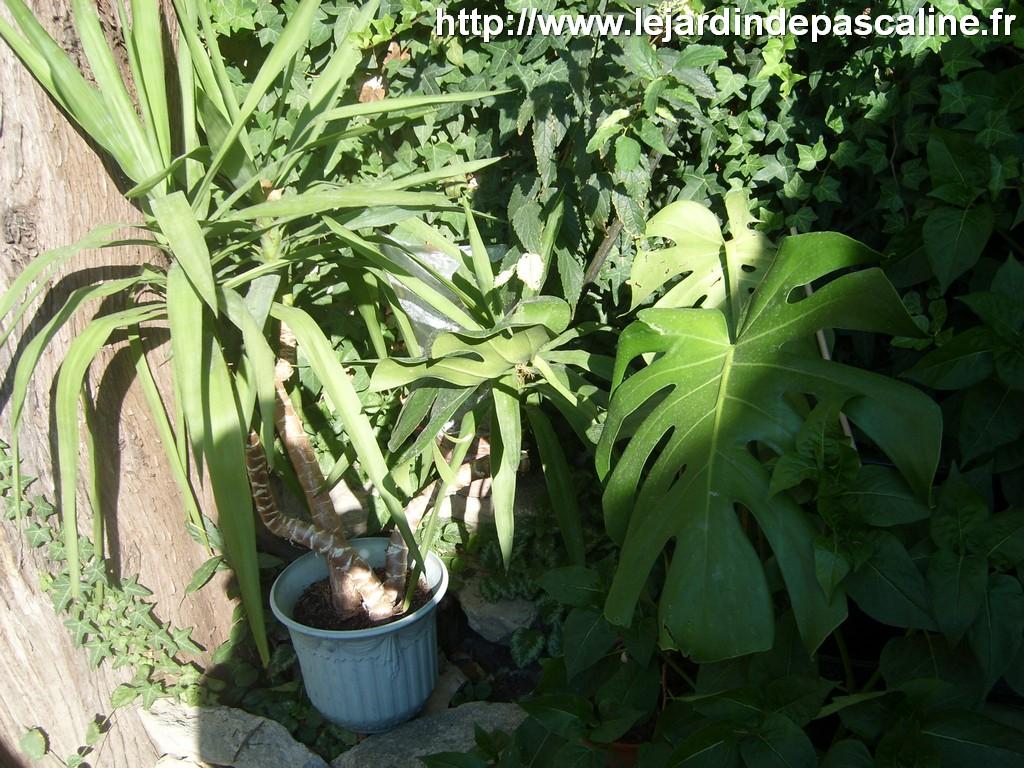 le jardin de pascaline comment donner du pep 39 s vos plantes d 39 appartement. Black Bedroom Furniture Sets. Home Design Ideas