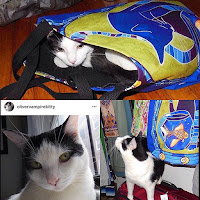 Olivervampirekitty with Cats of Karavella Totes