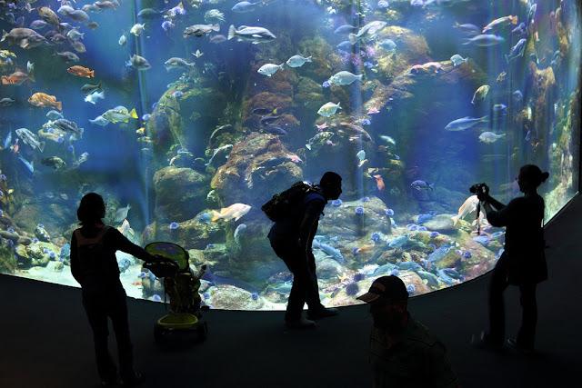 Best Aquariums in the USA: Steinhart Aquarium