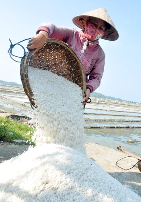 Nhà máy chế biến muối bỏ hoang, dân điêu đứng