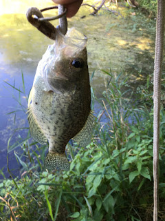 Crappie Fishing, Fishing In Ponds, Pond Fishing
