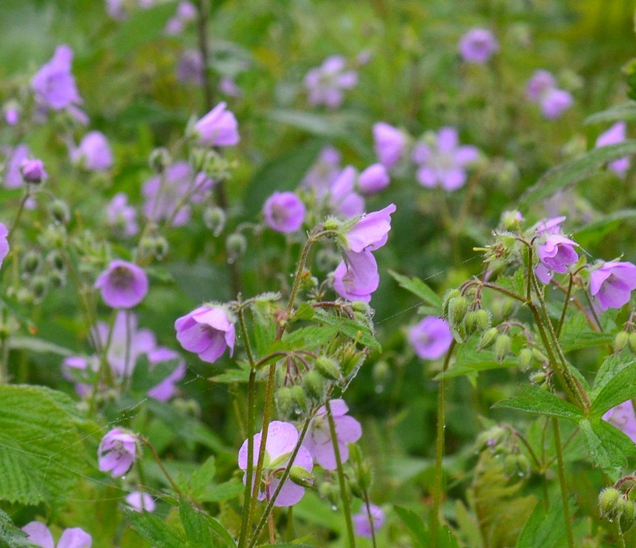 Flower Hill Farm: May Wildflowers