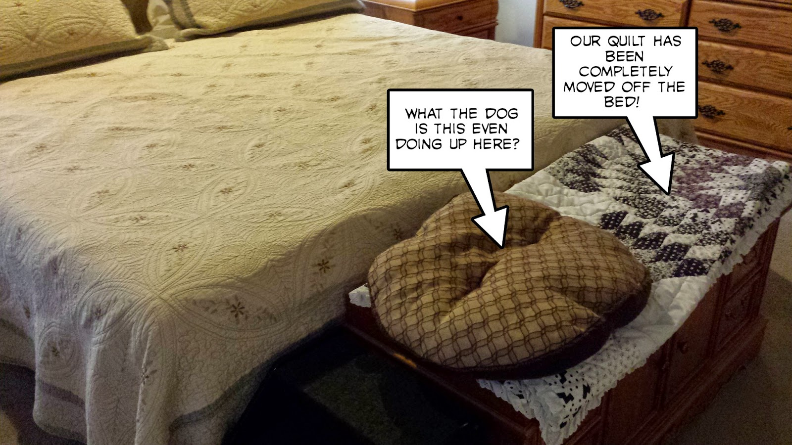 Dog hogging the bed - Oh My Dog What Is She Thinking So We Tried A Couple Nights With The New Rules And New Bed I Took A Little Nap On The Quilt And It Wasn T