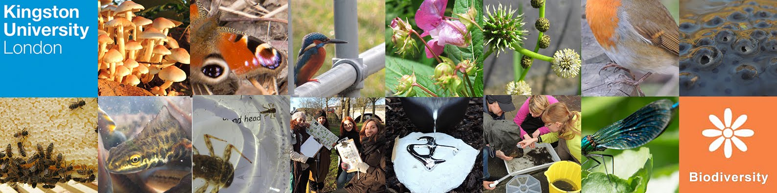 Kingston University Biodiversity Action Group