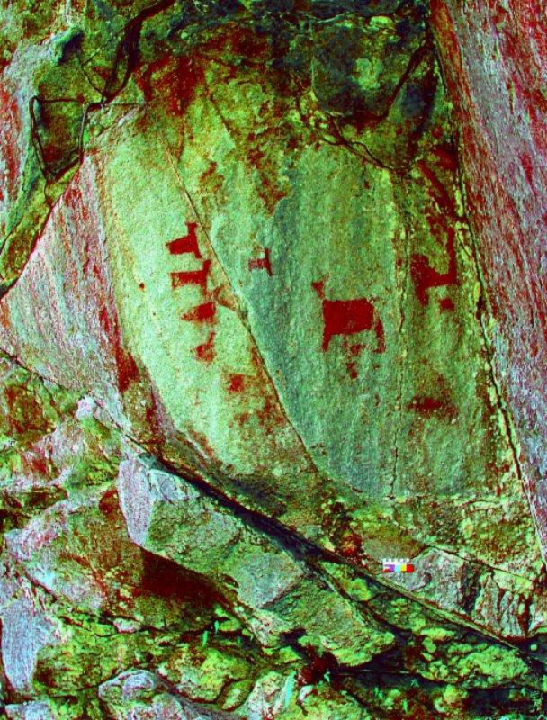 Imagen tratada digitalmente en la que aparecen representados camélidos andinos de cuerpo rectangular.
