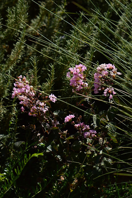 tuesday view, small sunny garden, amy myers, desert garden,