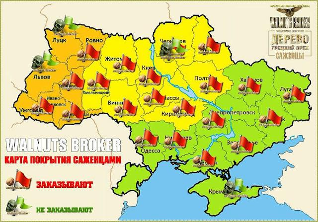 Анализ востребованности скороплодных и крупноплодных орехов в Украине на 2018 год от Walnuts Broker