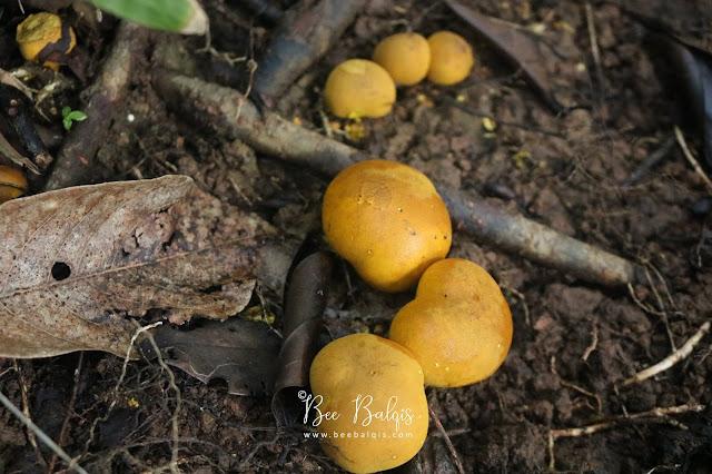 Tanaman di Taman Nasional Gunung Palung