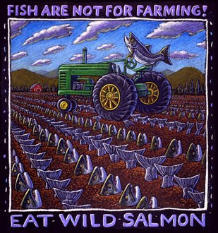 magnet says Fish are not for farming - eat wild salmon