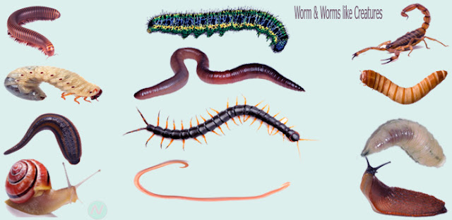 worm & worm like creatures name, worms,কীড়া, necessary vocabulary