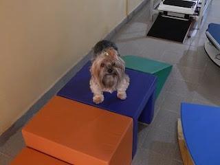 condomínio exercícios para cães
