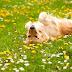 Τι έδειξε έρευνα για τα εντομοκτόνα στον σκύλο...
