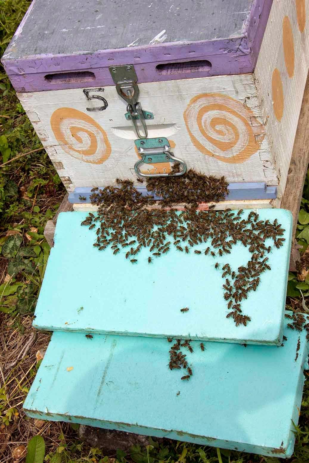 Ενίσχυση αδύναμου μελισσιού με παραμάνες εργάτριες...