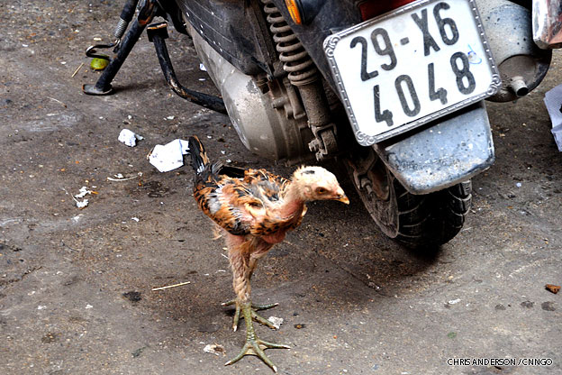 hanoi-old-quarter-chicken-vietnam