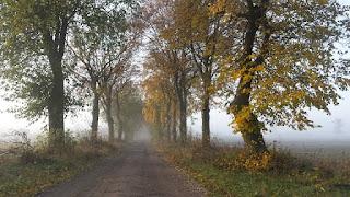 krajobrazy, mgła, widoki