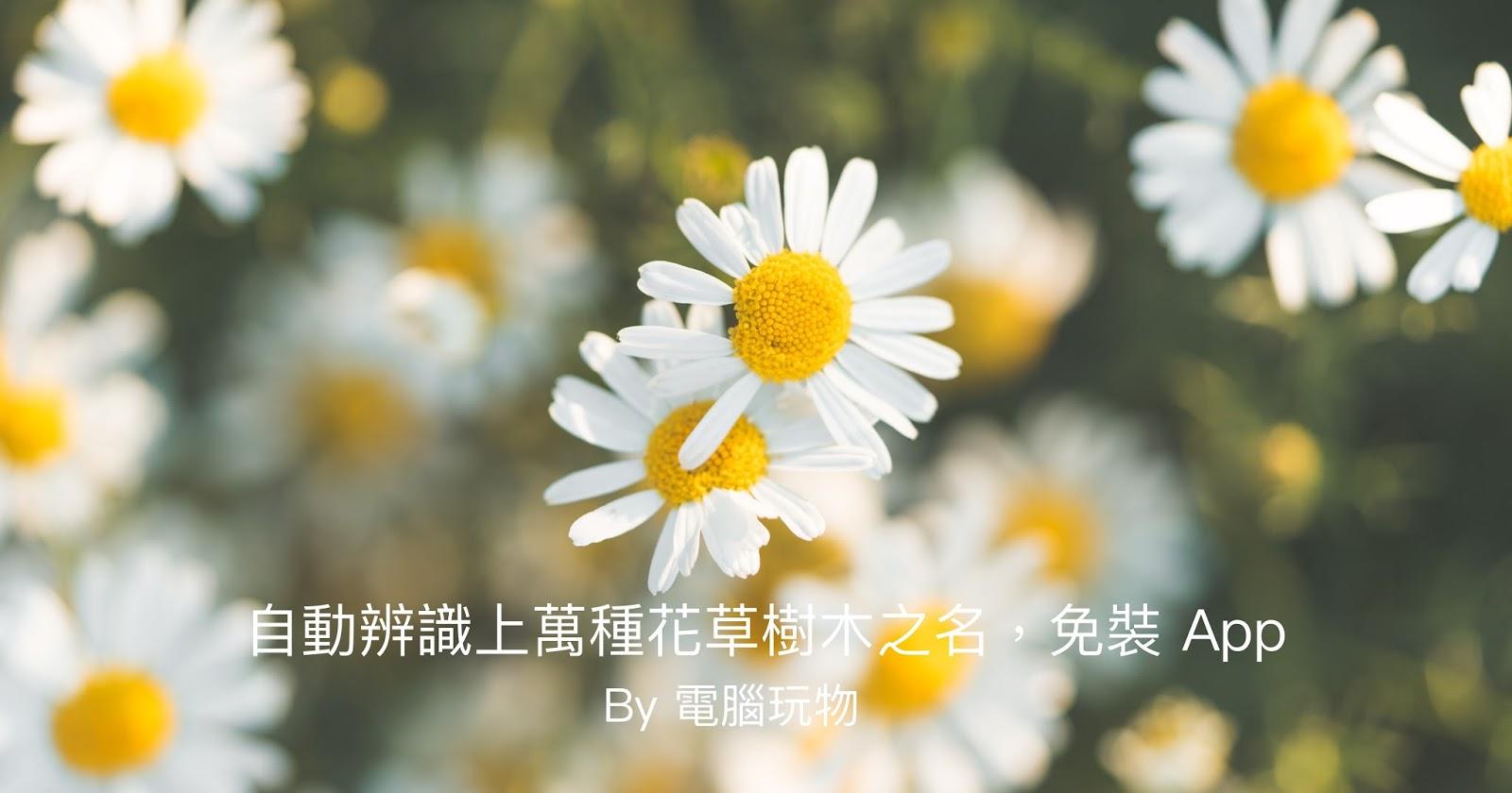 Pl@ntNet 自動辨識花卉植物名稱,只需上傳野生花草樹木照片