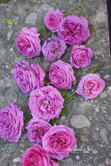 trandafiri roz de gradina