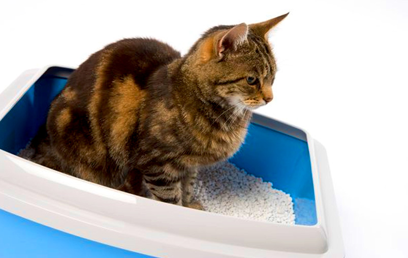 Tips for keeping a clean litter box