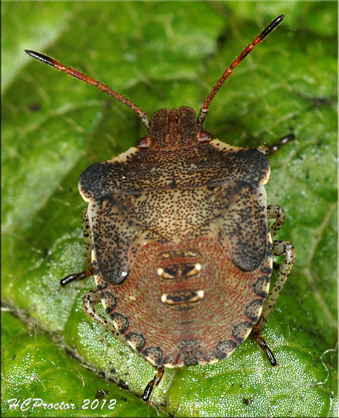 Stink Bug It's a Bugs Life w/Bee's Frogs etc. Pinterest