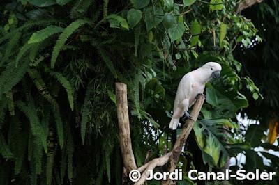 Cacatúa en Biosfera
