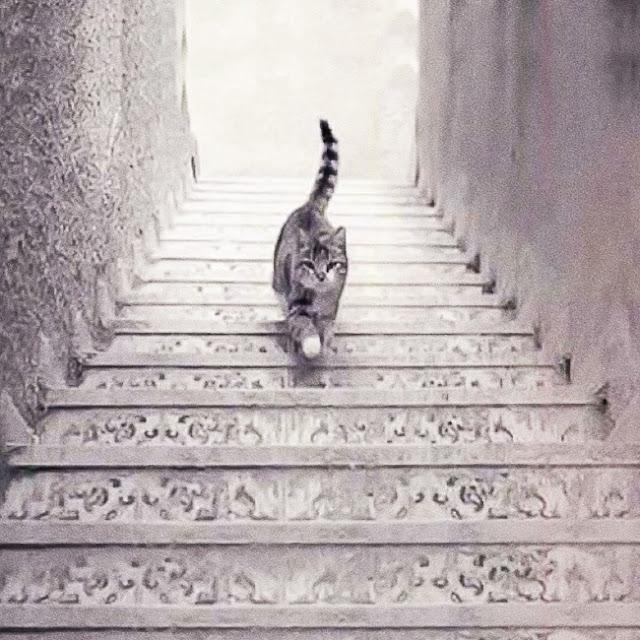 travenusa.com - kucing naik turun tangga