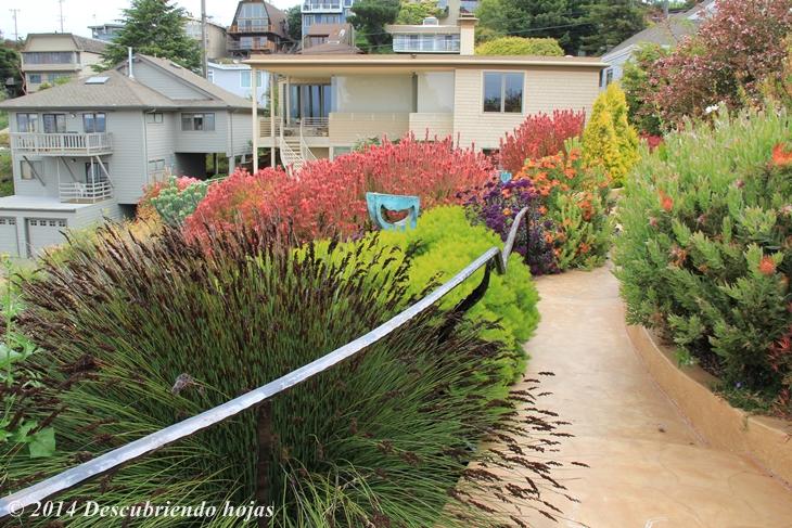 Descubriendo hojas el wave garden jard n ola y sus for Jardines de bajo mantenimiento