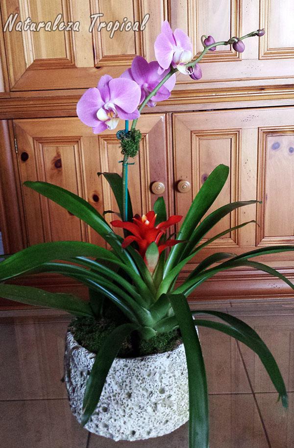 Naturaleza tropical todo lo que debes saber para cultivar - Maceta para orquideas ...