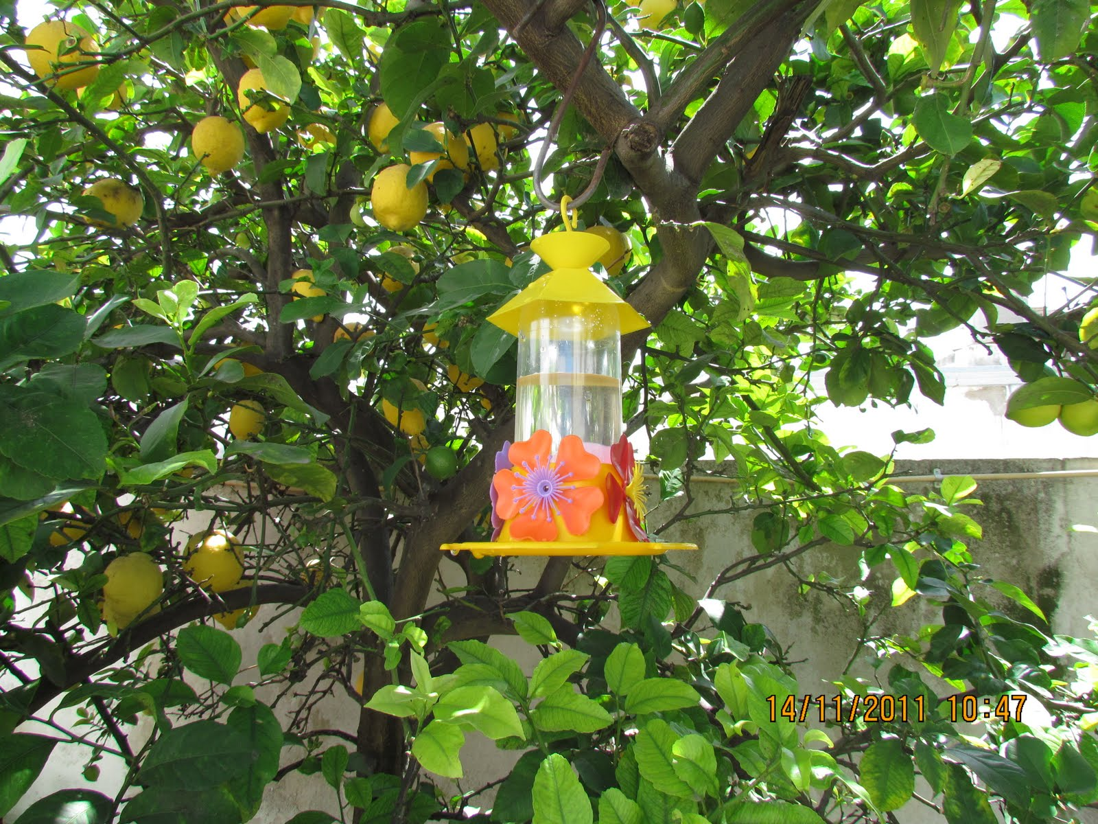 Maria bombones marvilloso reencuentro for Bebederos para aves jardin