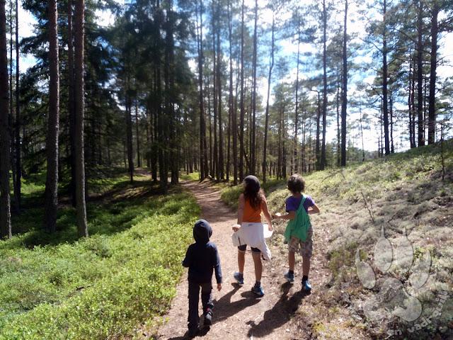 Suede-Smaland-Store-Mosse-lilla-lovo-foret-coniferes