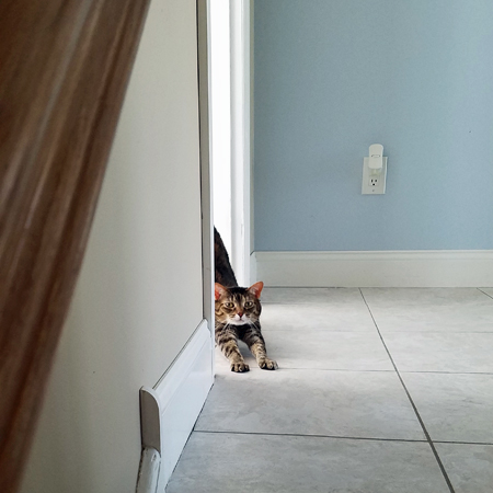image of Sophie the Torbie Cat stretching around a corner at the top of the stairs