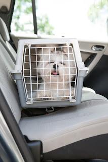 Cómo llevar a tu perro en coche - Fénix Directo Blog